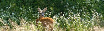 Felelősség a vadkárért, a vadászható állat által okozott kárért, a vadászati kárért, valamint a vad elpusztításával okozott kárért