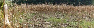 Egységes Mezőgazdasági Vadkárfelmérési Útmutató
