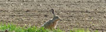 A vadon élő állatok által okozott károkért való felelősség szabályai a bírósági gyakorlat tükrében